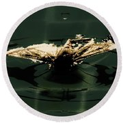 Round Beach Towel featuring the photograph Moth Ripples by Jessica Shelton