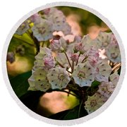 Mountain Laurel Flowers 2 Round Beach Towel