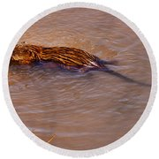 Muskrat Swiming Round Beach Towel