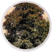 Round Beach Towel featuring the photograph My Friend The Tree by Juergen Weiss