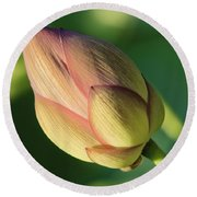 Nelumbo 'mrs. Perry Slocum Round Beach Towel