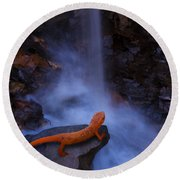 Newt Falls Round Beach Towel by Ron Jones