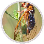 Noisy Cicada Round Beach Towel by Shane Bechler