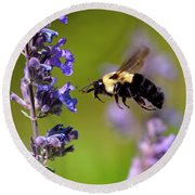 Non Stop Flight To Pollination Round Beach Towel