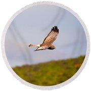 Northern Harrier Flight Round Beach Towel by Mike  Dawson