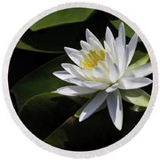 Nymphaea Marliacea 'albida' Round Beach Towel