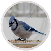 Round Beach Towel featuring the photograph Blue Jay by Maciek Froncisz
