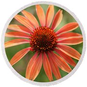 Orange Coneflower Round Beach Towel