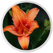 Round Beach Towel featuring the photograph Orange Lily by Davandra Cribbie