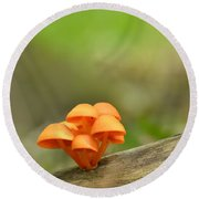 Round Beach Towel featuring the photograph Orange Mushrooms by JD Grimes