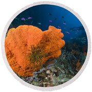 Orange Sponge With Crinoid Attached Round Beach Towel
