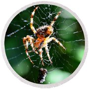 Orb Weaver And Lunch Round Beach Towel