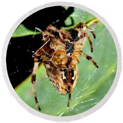 Orb Weaver Waits Round Beach Towel