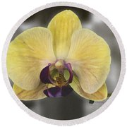 Orchid Study IIi Round Beach Towel by Patricia Griffin Brett