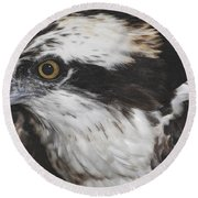 Round Beach Towel featuring the photograph Osprey by Lydia Holly