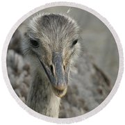 Round Beach Towel featuring the photograph Ostrich by Heidi Poulin