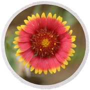 Painted Blanket Flower Round Beach Towel