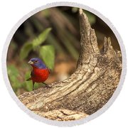Painted Bunting On Log Round Beach Towel by Anne Rodkin