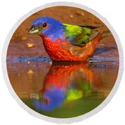 Round Beach Towel featuring the photograph Painted Bunting Reflecting by Myrna Bradshaw