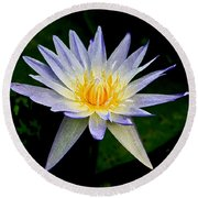 Round Beach Towel featuring the photograph Painted Lily And Pads by Steve McKinzie