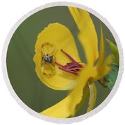 Partridge Pea And Matching Crab Spider With Prey Round Beach Towel