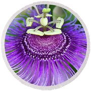 Round Beach Towel featuring the photograph Passion Flower by Albert Seger