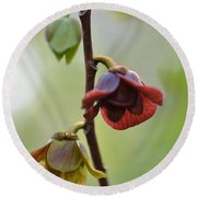 Paw-paw Flowers Round Beach Towel