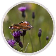 Peacock Butterfly On Knapweed Round Beach Towel