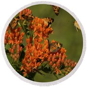 Pearly Crescentpot Butterflies Landing On Butterfly Milkweed Round Beach Towel by Daniel Reed