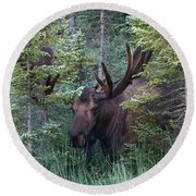 Round Beach Towel featuring the photograph Peeking Through The Spruce by Doug Lloyd