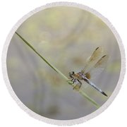 Round Beach Towel featuring the photograph Perched Dragon In Sepia by JD Grimes