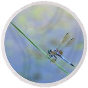 Round Beach Towel featuring the photograph Perched Dragon by JD Grimes
