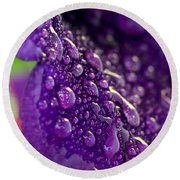 Round Beach Towel featuring the photograph Petunia Raindrops by Suzanne Stout