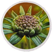 Round Beach Towel featuring the photograph Pinchshin Bud by Debbie Portwood