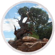 Pine Tree By The Canyon Round Beach Towel by Dany Lison
