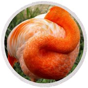 Round Beach Towel featuring the photograph Pink Flamingo Sleep by Rebecca Margraf