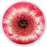 Round Beach Towel featuring the photograph Pink Gerbera Daisy Close-up by Kerri Mortenson