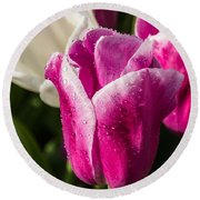 Round Beach Towel featuring the photograph Pink Tulip by David Gleeson