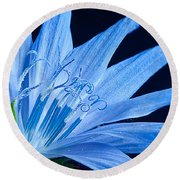 Round Beach Towel featuring the photograph Pistil's Of Chicory by Randall Branham