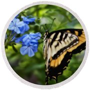 Round Beach Towel featuring the photograph Plumbago And Swallowtail by Steven Sparks
