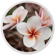 Round Beach Towel featuring the photograph Plumeria   Kona Hawii by James Steele
