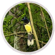 Round Beach Towel featuring the photograph Plush-crested Jay by David Gleeson