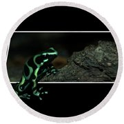 Poisonous Green Frog 02 Round Beach Towel by Thomas Woolworth
