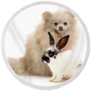 Pomeranian And Black-and-white Spotted Round Beach Towel