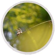 Round Beach Towel featuring the photograph Pond-side Perch by JD Grimes