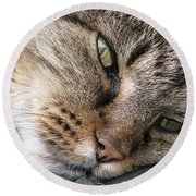 Round Beach Towel featuring the photograph Pondering by Rory Sagner