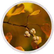 Round Beach Towel featuring the photograph Popcorn Tree by Dan Wells