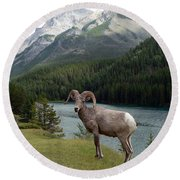 Portrait Of A Bighorn Sheep At Lake Minnewanka  Round Beach Towel