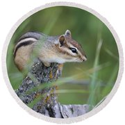 Round Beach Towel featuring the photograph Portrait Of A Chipmunk by Penny Meyers