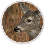 Portrait Of  Browsing Deer Round Beach Towel